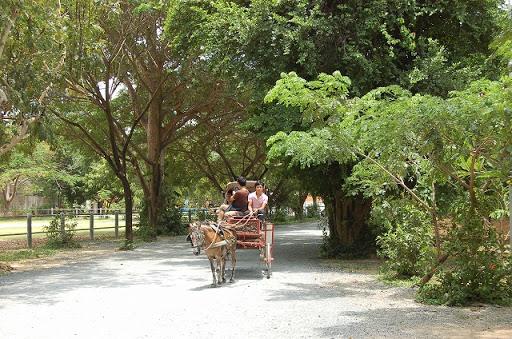 ザ・サンクチュアリオブトゥルース - 帰りは基本歩きです。反対から来た馬車。
