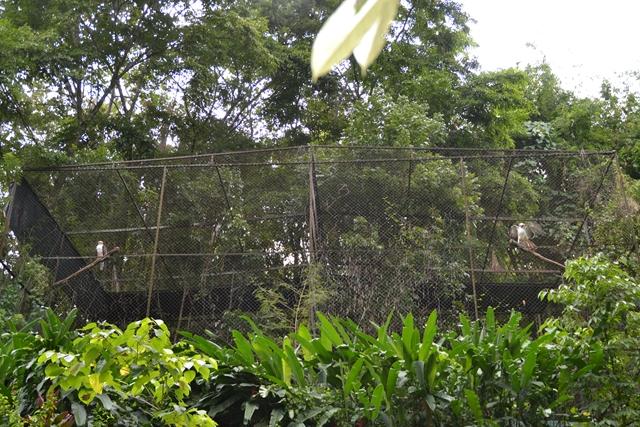 フィリピンイーグル(3)