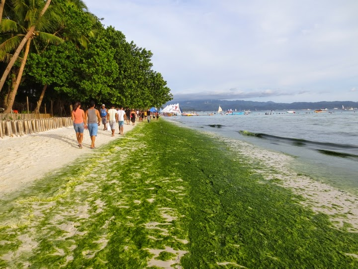 ボラカイ島のホワイトサンドビーチ1から2に向かう周辺の緑藻
