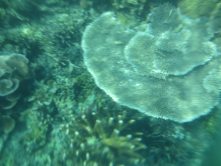 パラワンのコロンのサンゴ