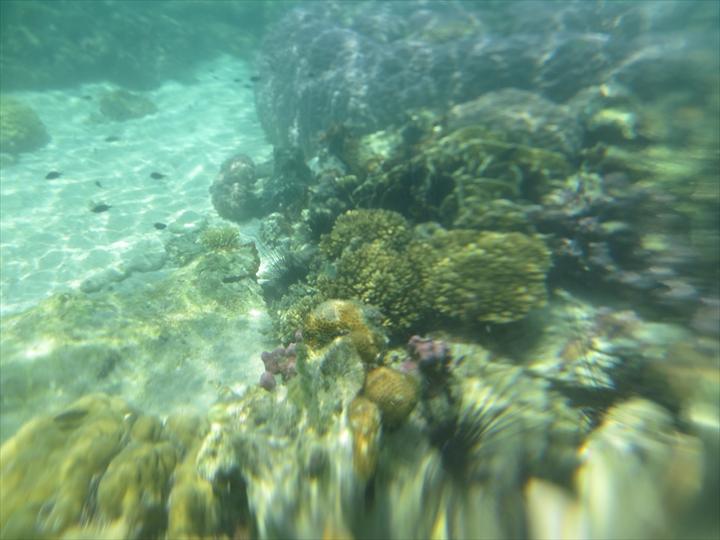CYCビーチ - シュノーケリングで満点のサンゴ(1)