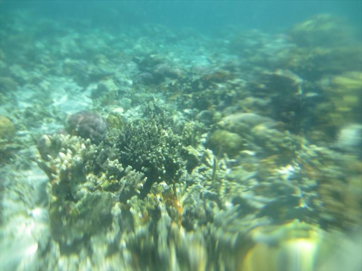 シュノーケリングでサンゴ(2)