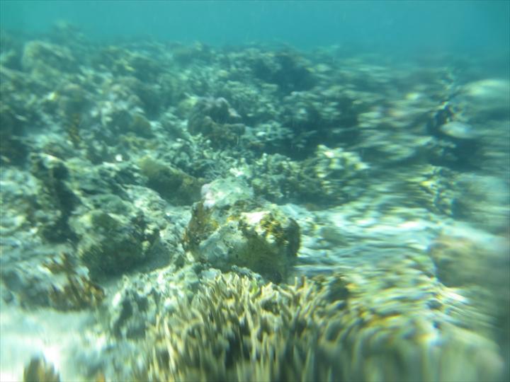 シュノーケリングでサンゴ(3)