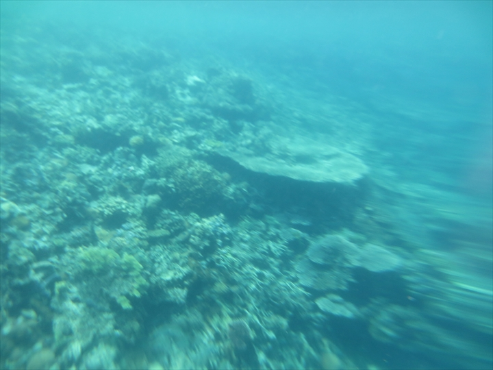 シュノーケリングでサンゴ(4)