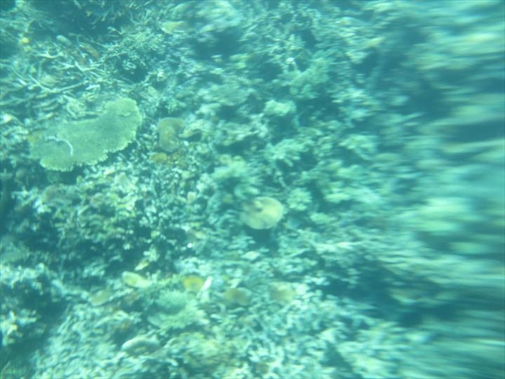 シュノーケリングでサンゴ(5)