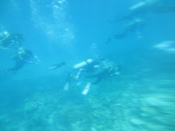 CYCビーチ - ダイバーがゆらゆら泳ぐ