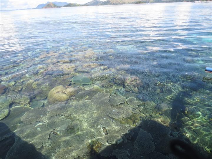 サンゴがメチャ綺麗だったリーフガーデン(浅瀬のサンゴ)
