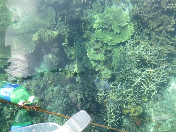 サンゴがメチャ綺麗だったリーフガーデン(バンカー真下のサンゴ)
