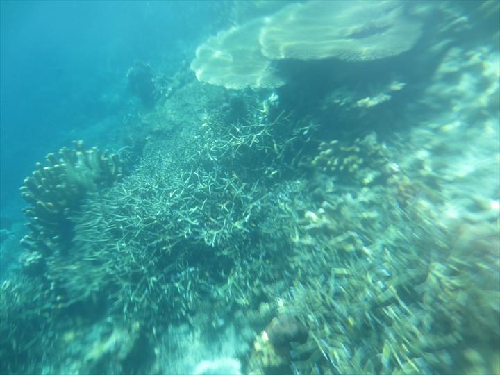 サンゴがメチャ綺麗だったリーフガーデン(4)