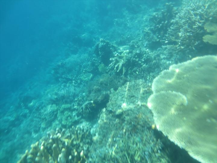サンゴがメチャ綺麗だったリーフガーデン(5)