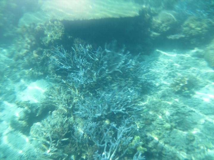 サンゴがメチャ綺麗だったリーフガーデン(6)