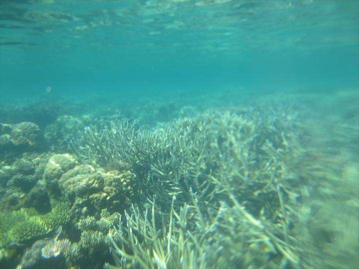 サンゴがメチャ綺麗だったリーフガーデン(7)
