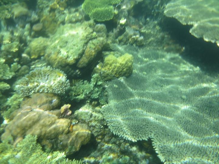 サンゴがメチャ綺麗だったリーフガーデン(10)
