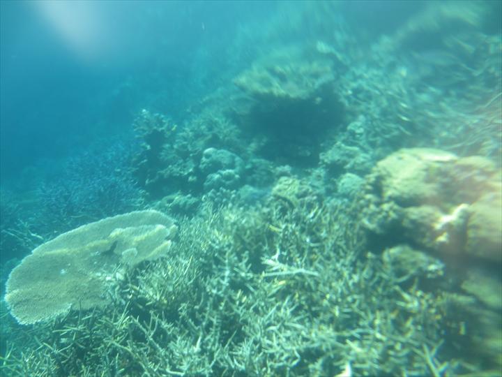 サンゴがメチャ綺麗だったリーフガーデン(12)
