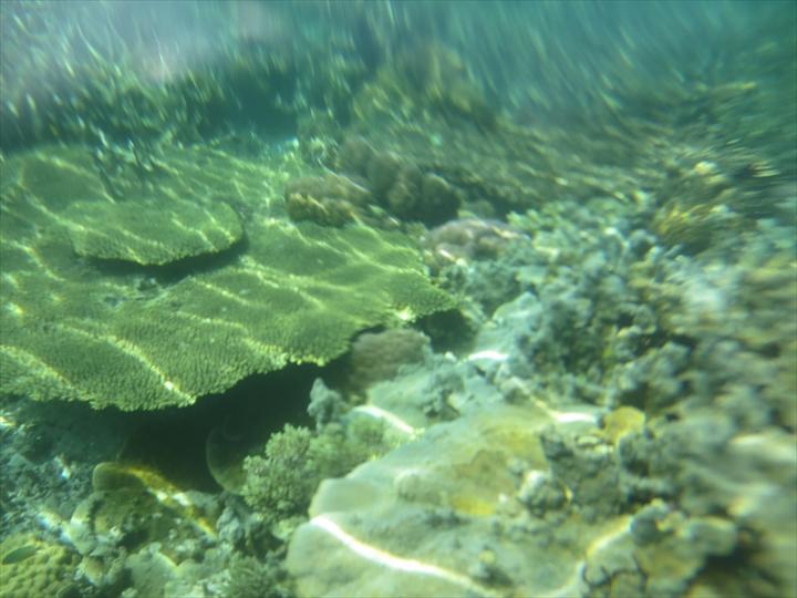 サンゴがメチャ綺麗だったリーフガーデン(13)
