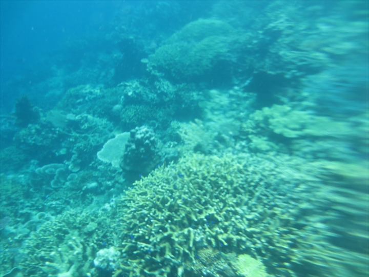 サンゴがメチャ綺麗だったリーフガーデン(14)